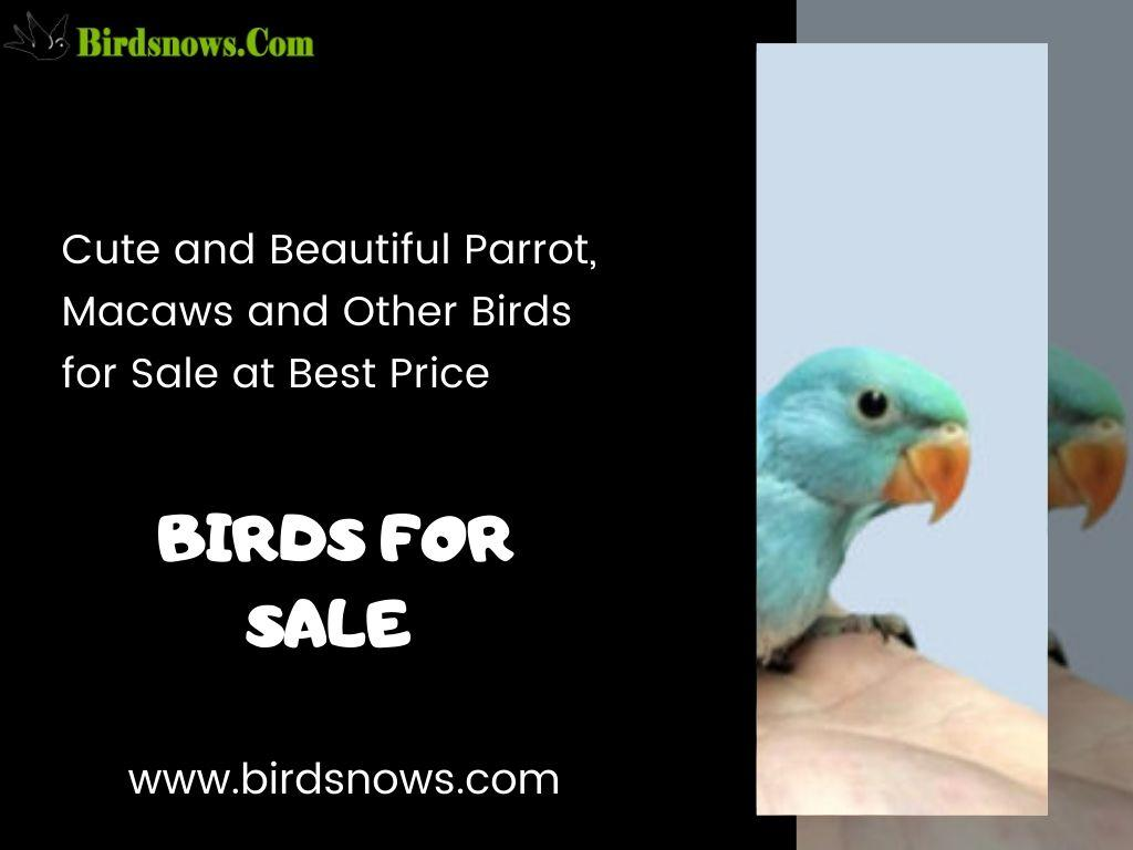 Photo Best Birds for sale online At Affordable Price