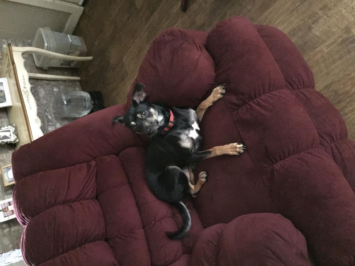 Photo Free dog to a good home