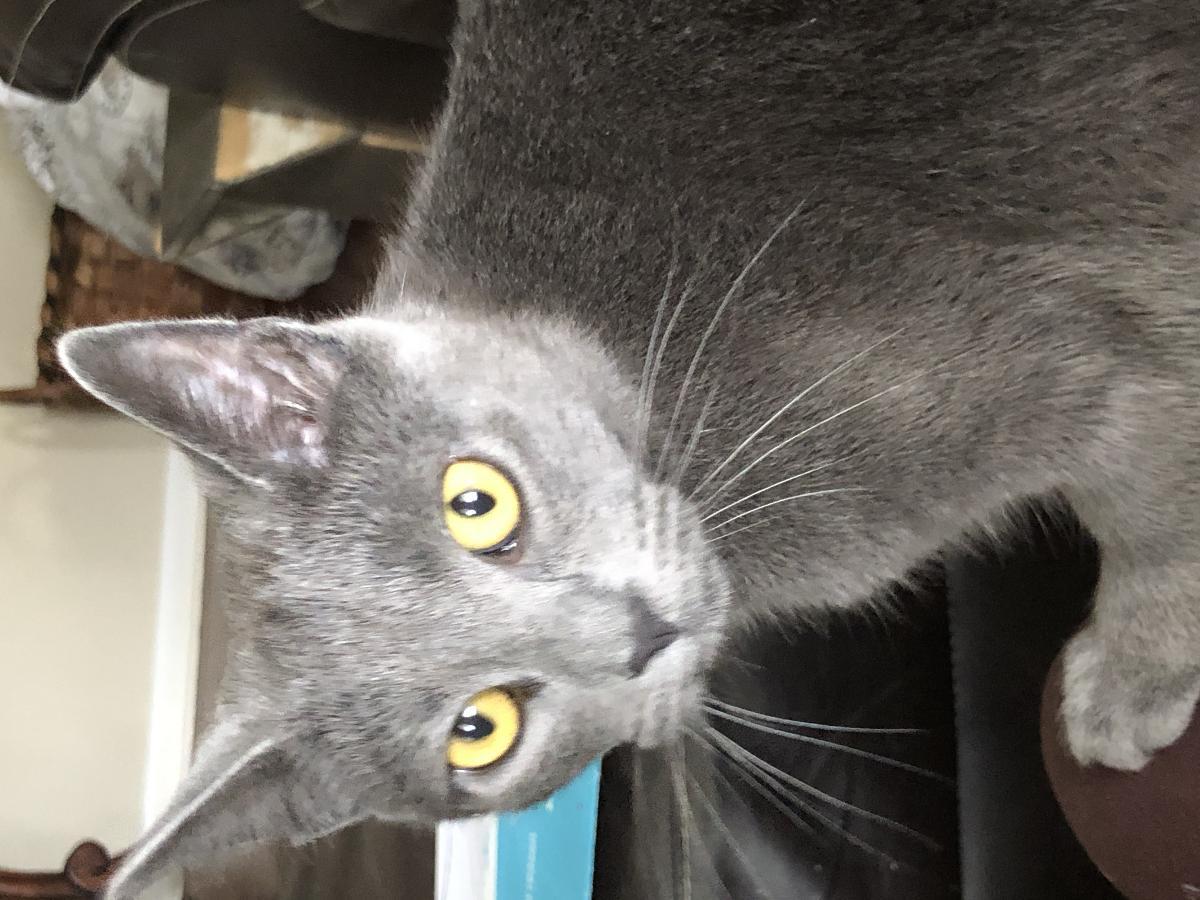 Photo Free female kitty to a good home
