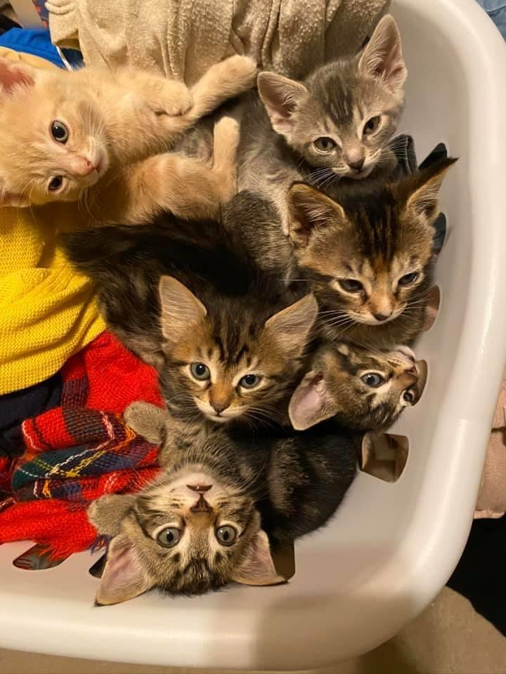 Photo 6 Free Kittens to Good Home. Located in Moody, AL