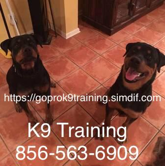 Photo No more chasing your dog no more out-of-control behavior
